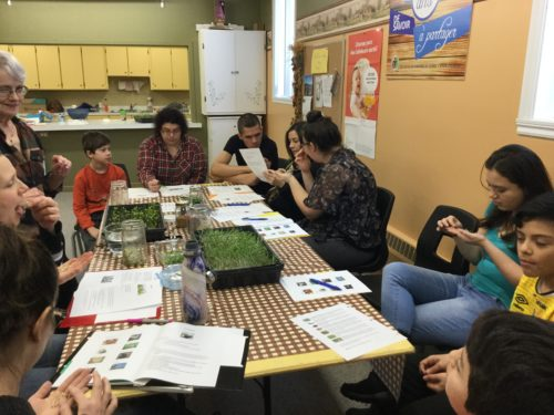 atelier du 10-03-018 Pousses et germinations-11
